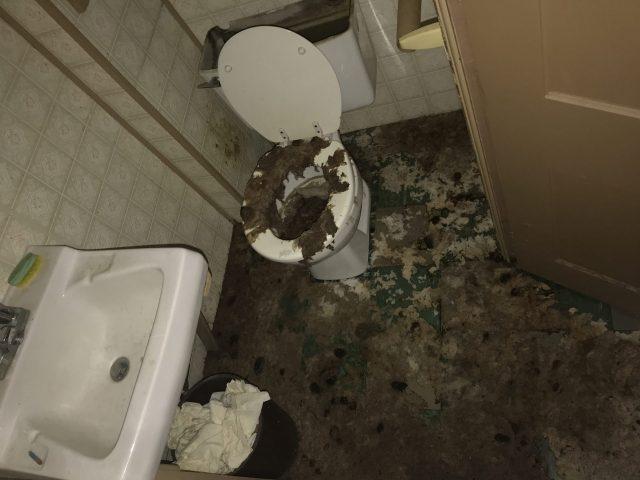 Sewage Clean Up